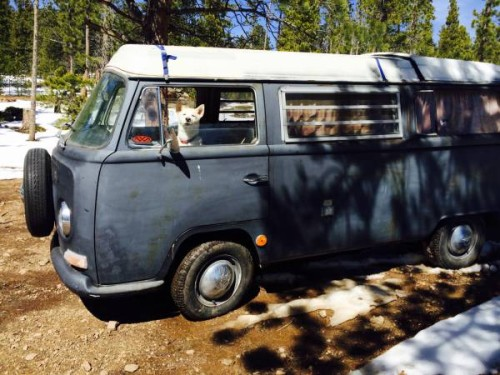 1969 vw bus camper westfalia for sale in denver co. Black Bedroom Furniture Sets. Home Design Ideas